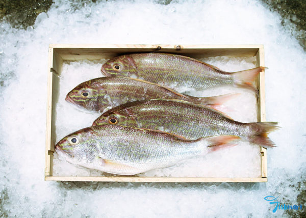 ang go li whole fish