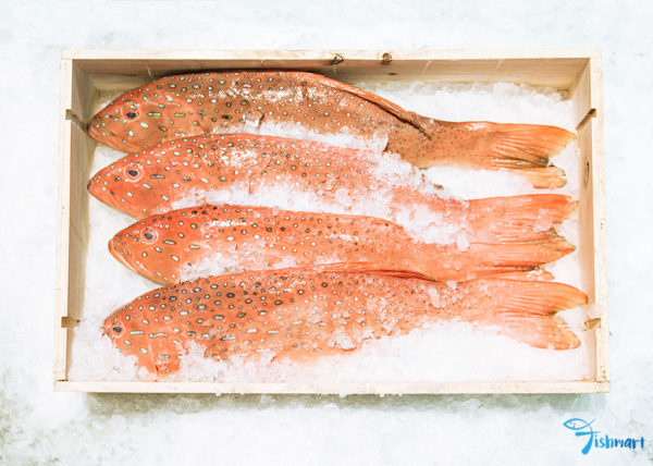 Best Red Grouper in Singapore