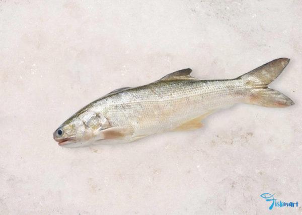 Balai threadfin fish