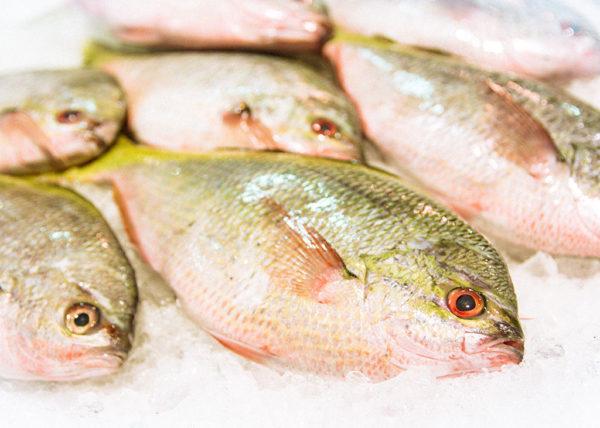 Buy fresh yellowtail fish