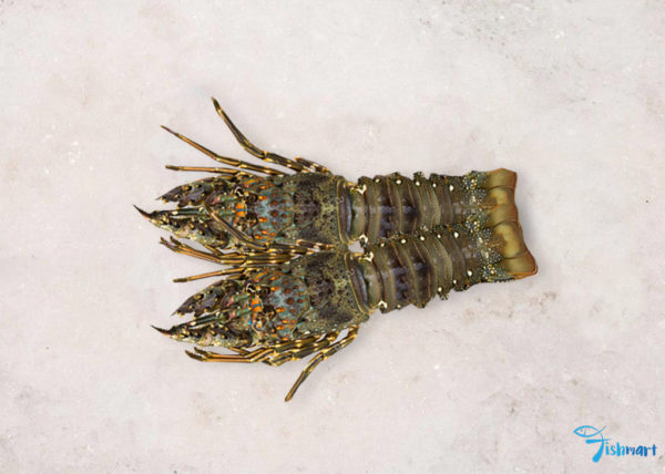 Lobster in Singapore